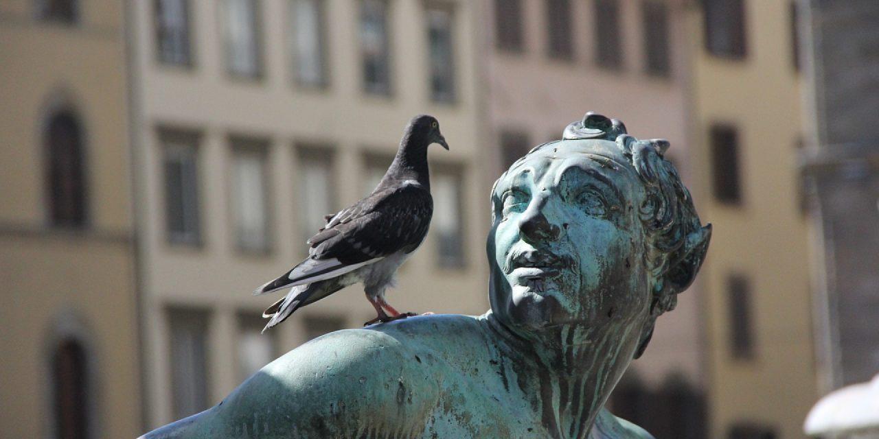 Comment repousser les oiseaux : pics anti-oiseaux et autres astuces