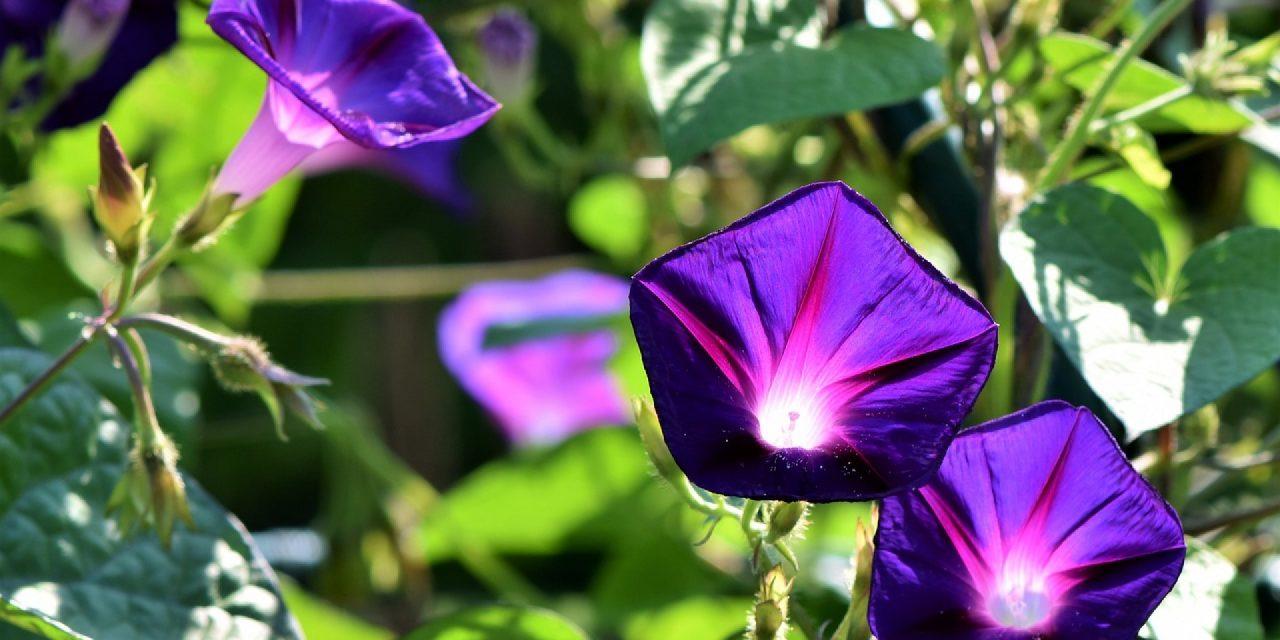 Serres de jardin, une idée de taille dans votre jardin