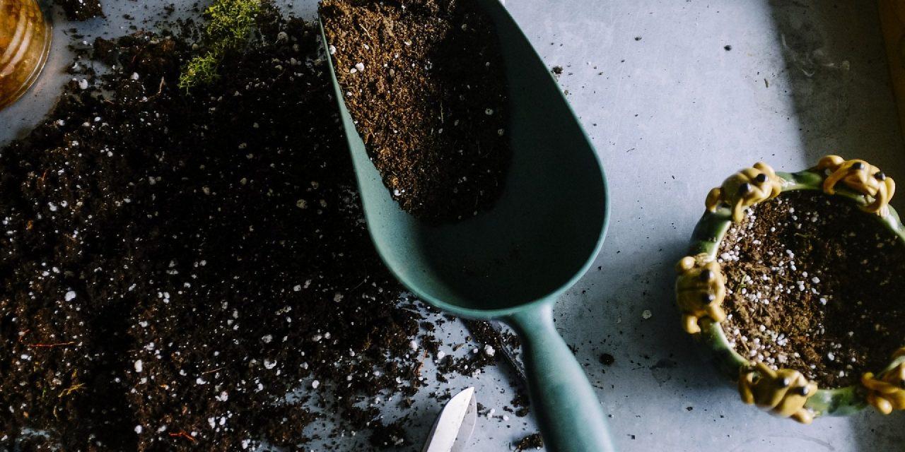 Comment réussir ses semis ? La technique imparable